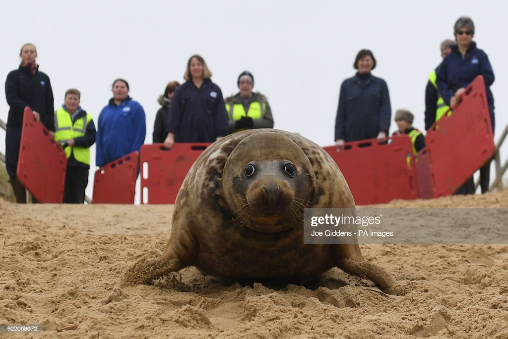 Seal trapped in frisbee : News Photo