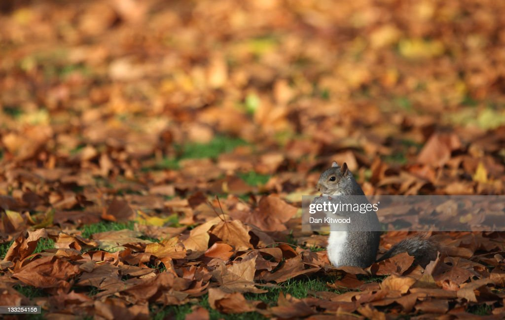 Visitors To London Enjoy The Warm Autumnal Weather : News Photo