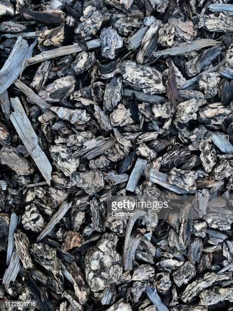 grey wood chips forest ground sunny