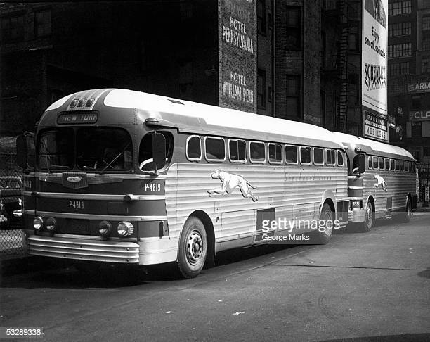 greyhound buses in new york city - greyhound stock photos and pictures