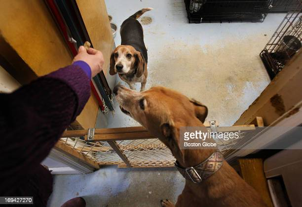 Greyhound Friends which evident in its name has been an animal welfare nonprofit dedicated to saving Greyhounds has branched out to care for numerous...