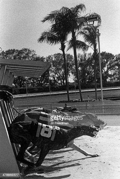 A greyhound race in Florida circa 1992