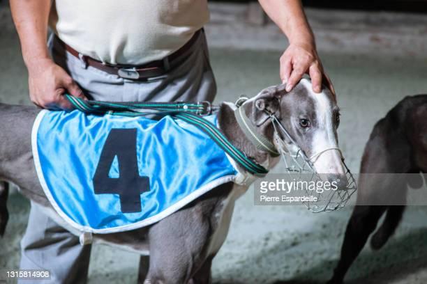 greyhound race - ドッグレース ストックフォトと画像