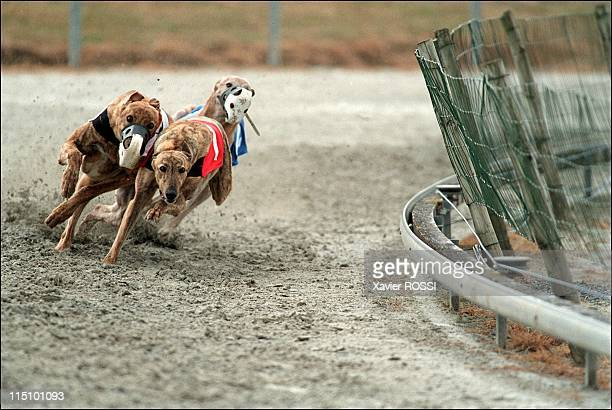 Greyhound races France organizes Europe Championship in Maulevrier France on June 13 2001 Greyhound race on the greyhound race center