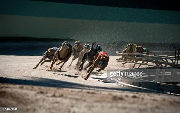 Greyhounds 5 of 7