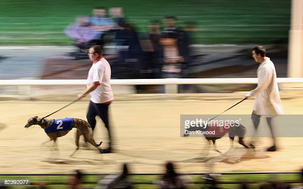 Greyhounds are paraded in front of the crowd during the last night of racing at Walthamstow Greyhound Stadium on August 16 2008 in London England The...