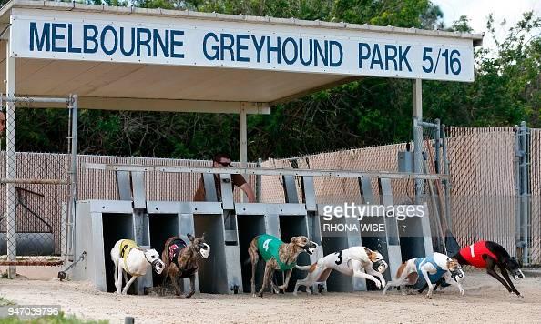 Greyhound Club Melbourne