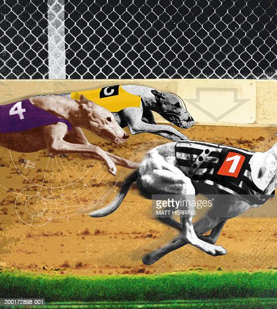 Greyhounds on race track, side view (sepia tone and black and white)