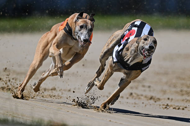 GBR: Perry Barr Greyhound Racing