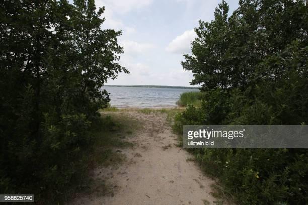 Gräfenhainichen Gremminer See hier fand eine Frau die mit ihrem Hund spazieren war ein menschliches Bein dass wie sich später herausstellte zur...