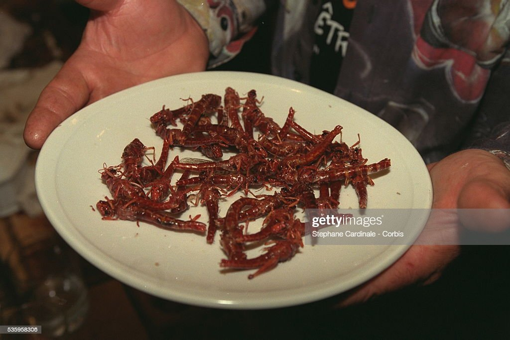 INSECT TASTING : News Photo