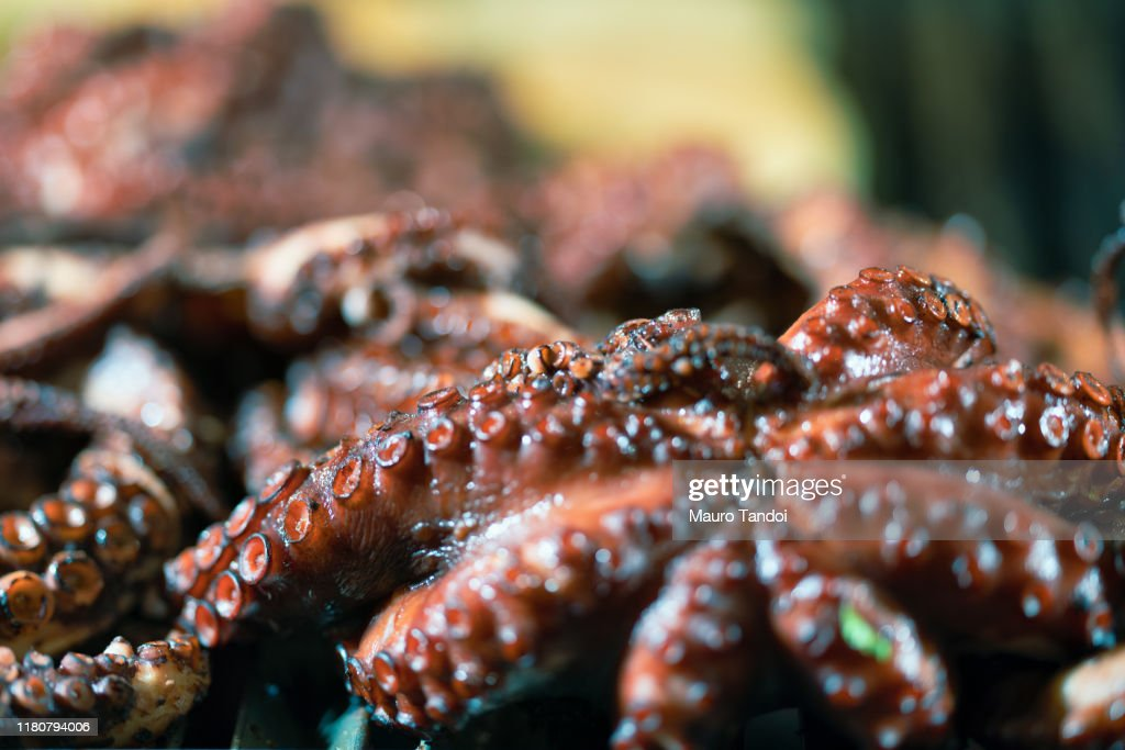 Grilled octopus : Stock Photo