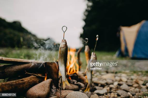 Grilling fish with campfire