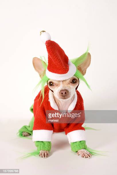 grinch - pet clothing stock pictures, royalty-free photos & images