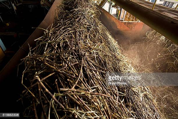 Grinder, start of the industrial process, sugarcane grinding for ethanol and sugar production in Sao Francisco ethanol and sugar plant, Sertaozinho...