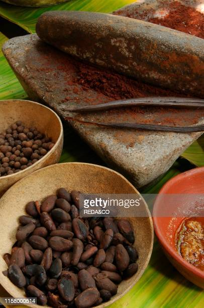 Grindstone with cocoa cocoa beans cocoa pods spices etc etc Plantation CACEP Tabasco Mexico