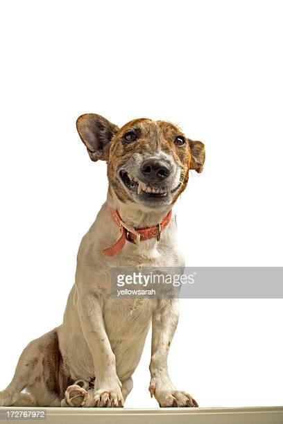 Grinning 犬