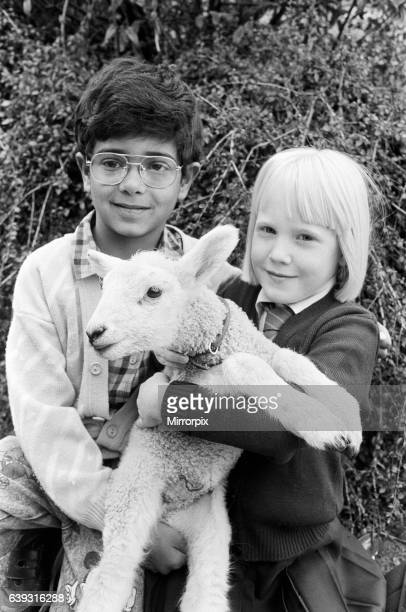 Grinning sheepishly sevenyearold Amman Hafiz and Chloe Jenkinson six with their twoweekold friend Snowy the lamb Children at Fixby Junior and Infant...