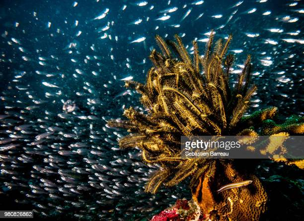 gripped - crinoidea stock pictures, royalty-free photos & images
