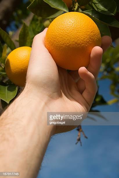 Gripping an orange