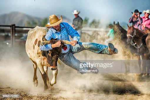 Gritty Tough Cowboy During The Steer Wrestling Competition Hanging On To A Land Steers Horns As He Prepares To Control Him And Bring Him To The Ground