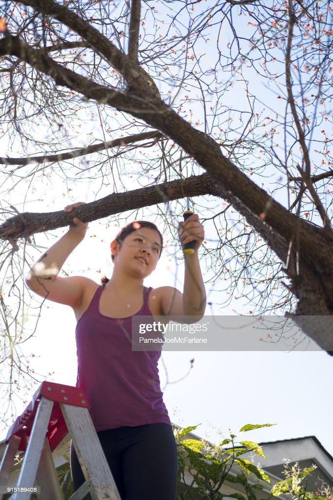 Gritty Young Woman on Ladder Pruning Tree with Hand Saw : Stock Photo