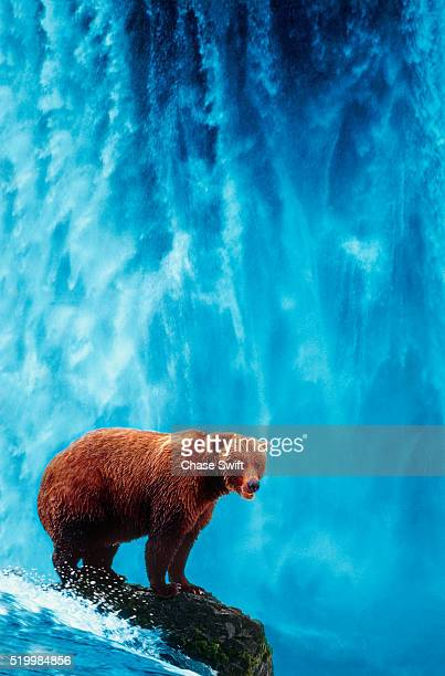 Grizzly Bear at Waterfall