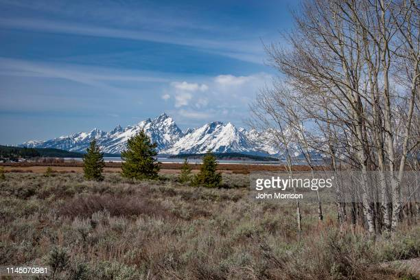 grizzly bear country in grand teton national park - western usa stock pictures, royalty-free photos & images