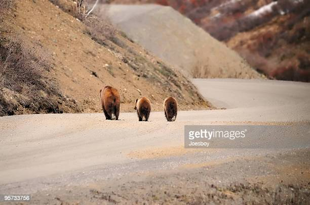 grizzly bear family in denali national park - bear tracks stock photos and pictures