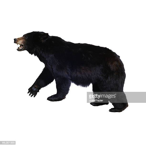grizzly bear - one animal stock pictures, royalty-free photos & images