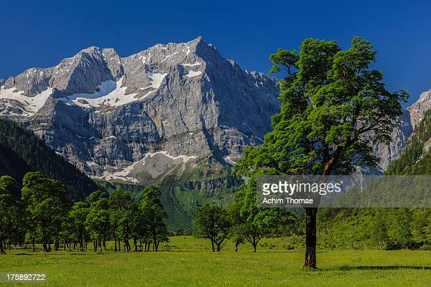 großer ahornboden - karwendel mountains stock pictures, royalty-free photos & images