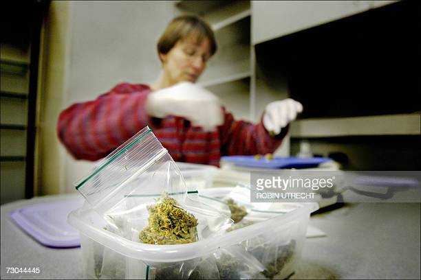 A pharmacist prepares doses of mediweed in the first cannabis pharmacy 19 January 2007 in Groningen northern of the Netherlands during the its first...