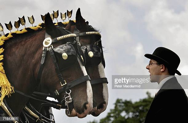 Groom in a bowler hat waits with two shire horses pulling a traditional brewer's wagon before the start of the Great British Beer Festival on July...