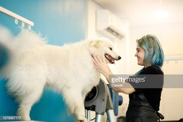 groomer drying dog in pet salon - pet grooming salon stock pictures, royalty-free photos & images