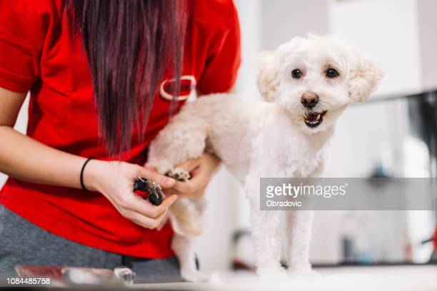 groomer with a dog - cut nails - cutting stock pictures, royalty-free photos & images