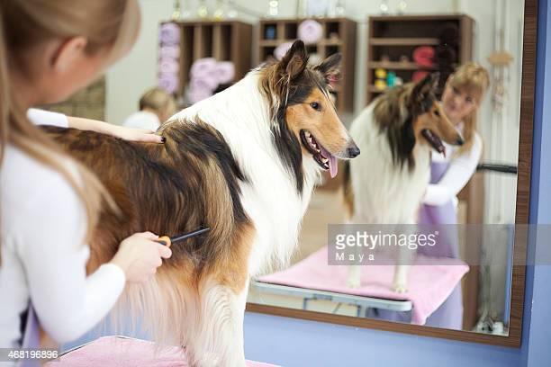 Groomer with a dog