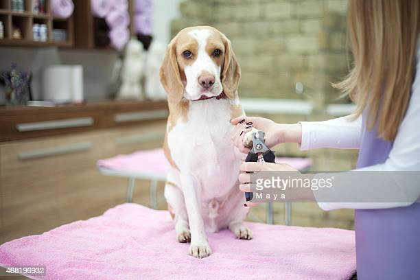 groomer with a dog - groom stock pictures, royalty-free photos & images