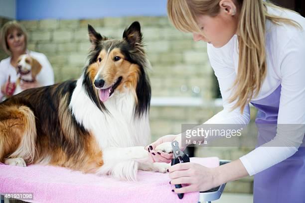 Cuidador con un perro