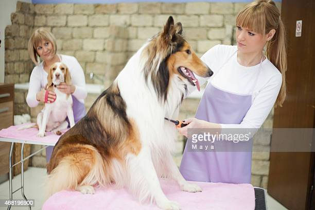 groomers working at grooming salon - pet grooming salon stock pictures, royalty-free photos & images