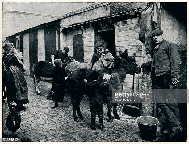 Grooming costers' donkeys London circa 1903 View of stables and donkeys for hire to costers street traders selling fruit and vegetables From Living...