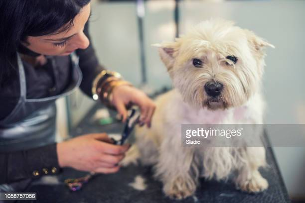 grooming salon - pet grooming salon stock pictures, royalty-free photos & images