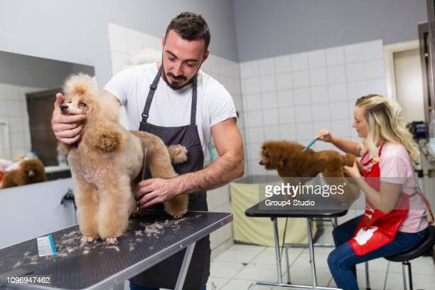 grooming salon - groom stock pictures, royalty-free photos & images