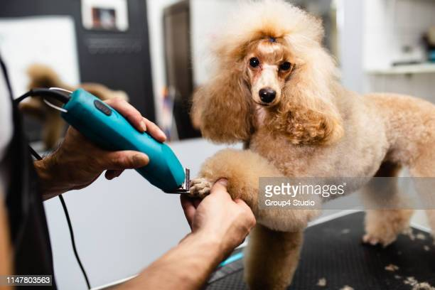 grooming salon - neat stock pictures, royalty-free photos & images