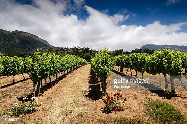 groot constantia - constantia stock pictures, royalty-free photos & images