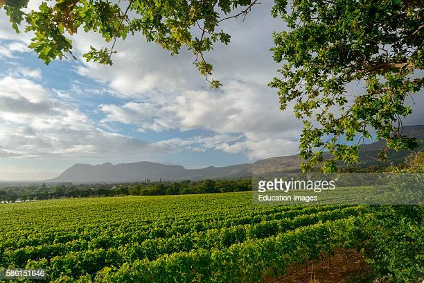 Groot Constantia vinyards Cape Town Western Cape South Africa