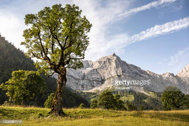 grosser ahornboden, hinterriss, karwendel, tyrol, austria - karwendel mountains stock pictures, royalty-free photos & images