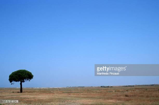 """grosseto . area called """" barbaruta """". - pianura foto e immagini stock"""