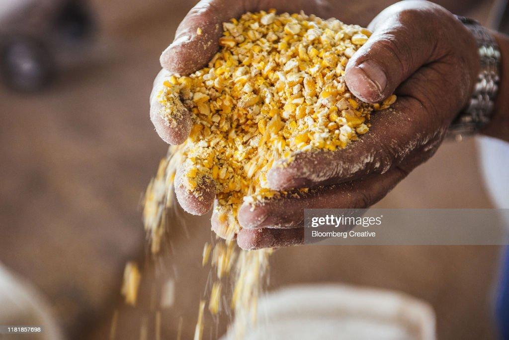 Ground Corn Maize : Stock Photo