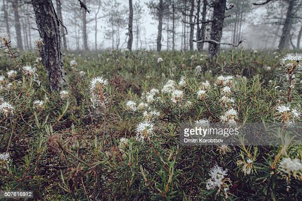 ground view in a forest in lahemaa national park - harjumaa stock pictures, royalty-free photos & images