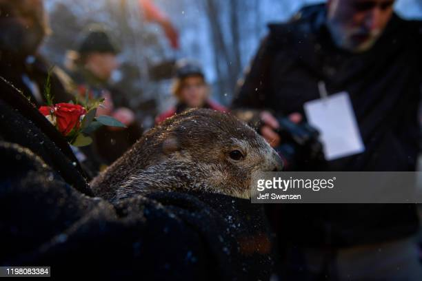 Groundhog handler John Griffiths holds Punxsutawney Phil who did not see his shadow predicting an early or late spring during the 134th annual...